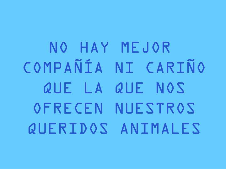 NO HAY MEJOR COMPAÑÍA NI CARIÑO QUE LA QUE NOS OFRECEN NUESTROS QUERIDOS ANIMALES