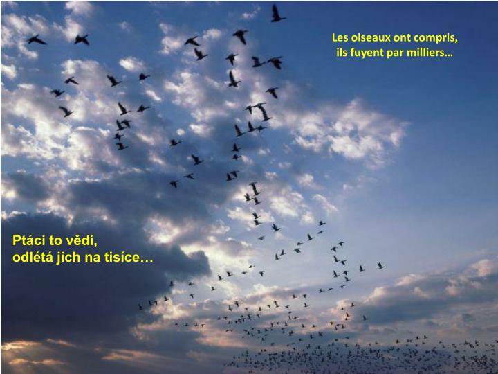 Les oiseaux ont compris, ils fuyent par milliers…