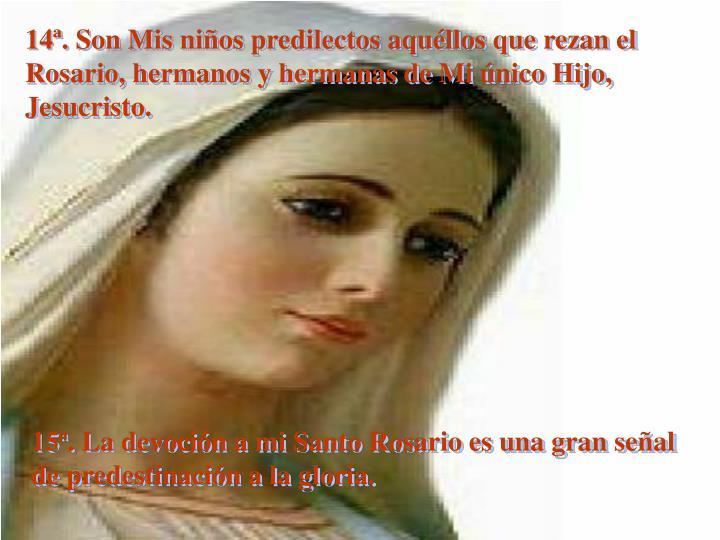 14ª. Son Mis niños predilectos aquéllos que rezan el Rosario, hermanos y hermanas de Mi único Hijo, Jesucristo.