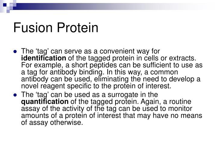 Fusion Protein