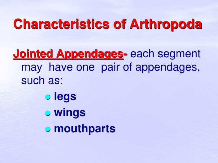 Characteristics of Arthropoda