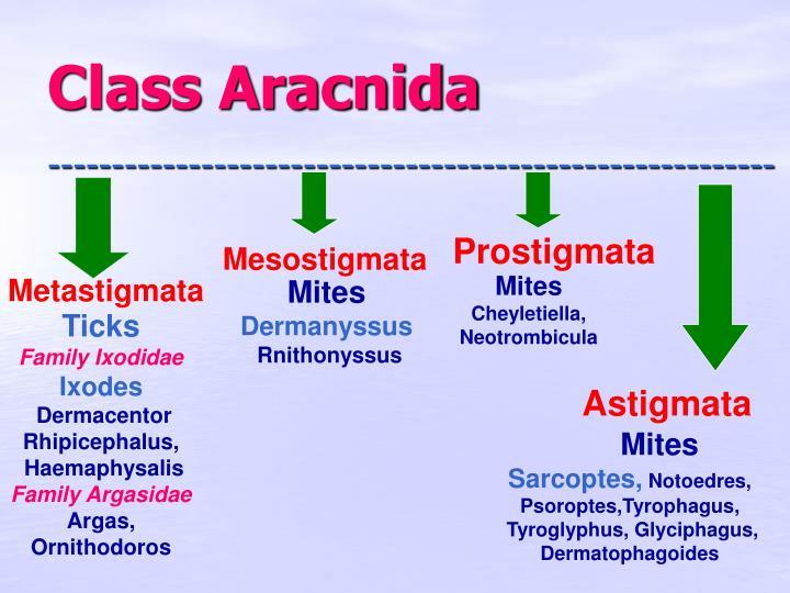 Class Aracnida
