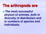 the arthropods are