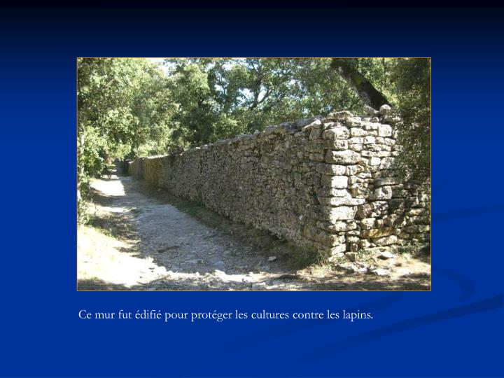 Ce mur fut édifié pour protéger les cultures contre les lapins.