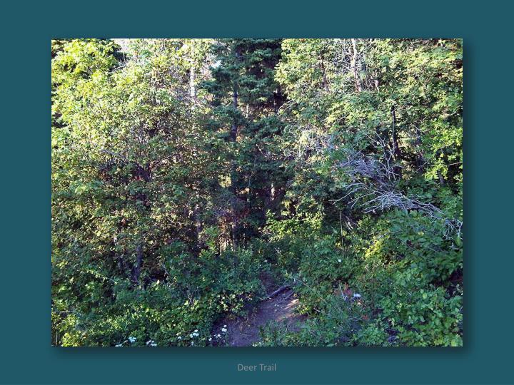 Deer Trail