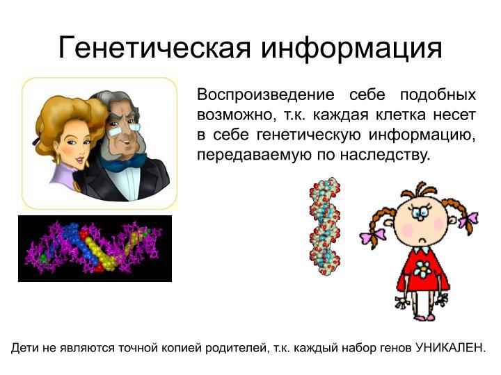 Генетическая информация