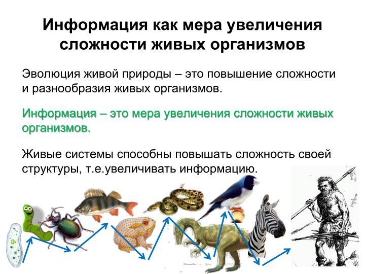 Информация как мера увеличения сложности живых организмов