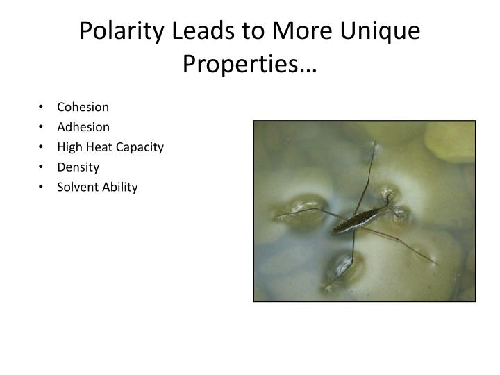 Polarity Leads to More Unique Properties…