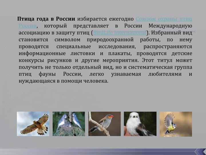 Птица года в России