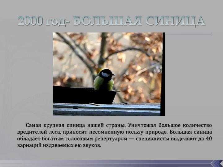 2000 год- БОЛЬШАЯ СИНИЦА