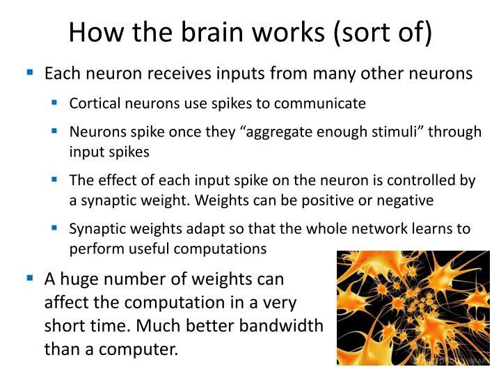 How the brain