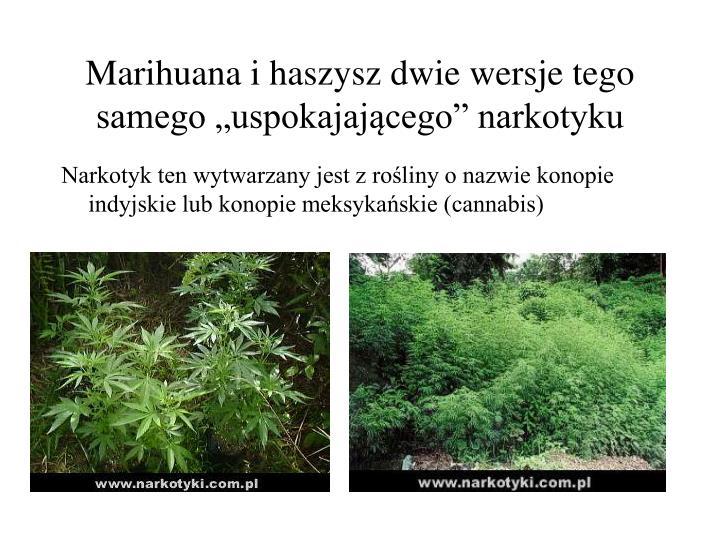 """Marihuana i haszysz dwie wersje tego samego """"uspokajającego"""" narkotyku"""