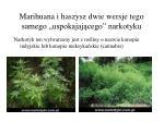 marihuana i haszysz dwie wersje tego samego uspokajaj cego narkotyku