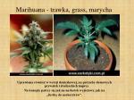 marihuana trawka grass marycha