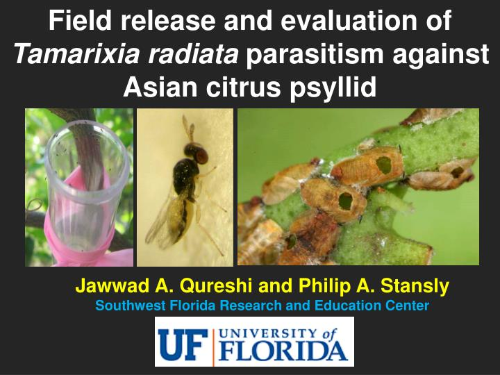 Field release and evaluation of