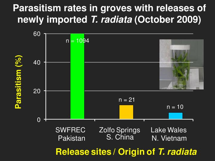 Parasitism rates in groves with releases of newly imported