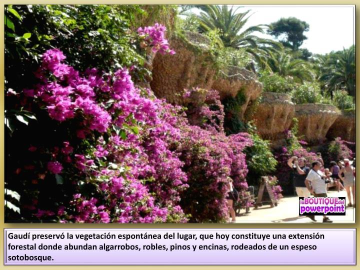 Gaudí preservó la vegetación espontánea del lugar, que hoy constituye una extensión forestal donde abundan algarrobos, robles, pinos y encinas, rodeados de un espeso sotobosque.