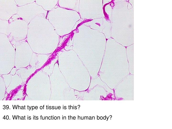 39. What type of tissue is this?
