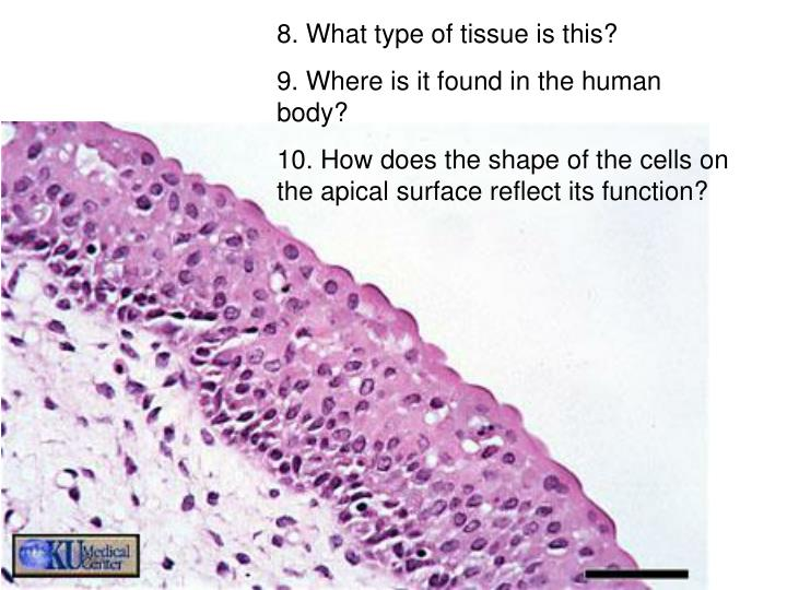 8. What type of tissue is this?