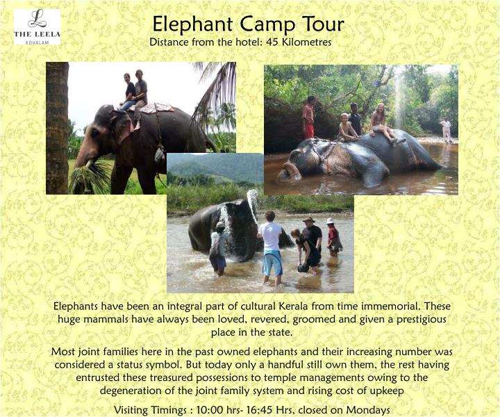 Elephant Camp Tour