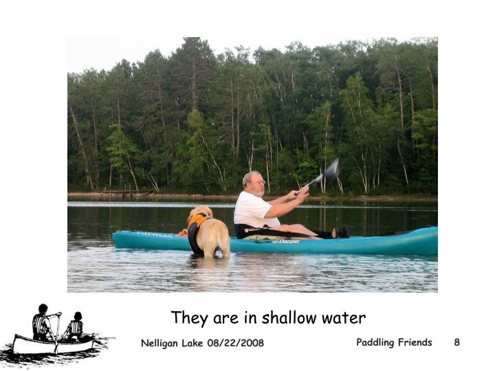 They are in shallow water