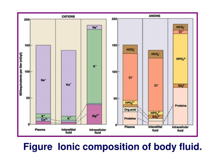 Figure  Ionic composition of body fluid.