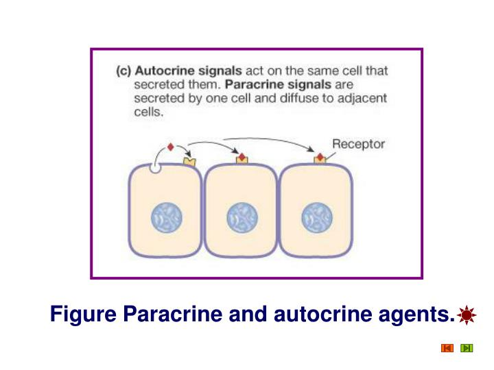 Figure Paracrine and autocrine agents.