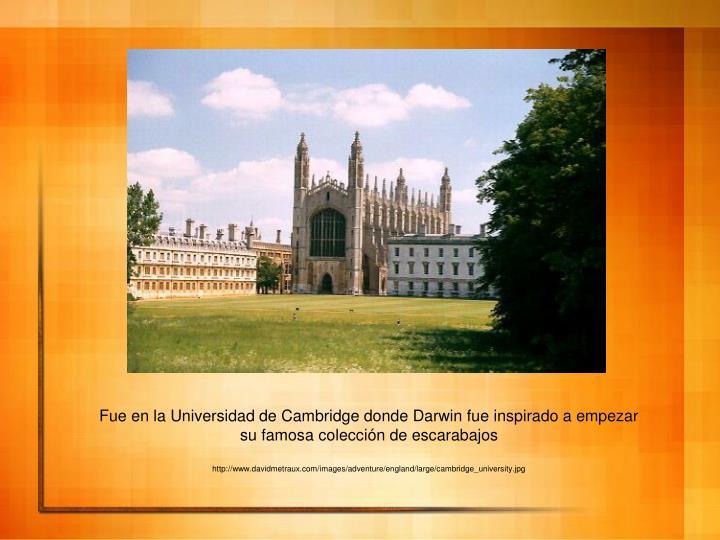 Fue en la Universidad de Cambridge donde Darwin fue inspirado a empezar su famosa colección de escarabajos