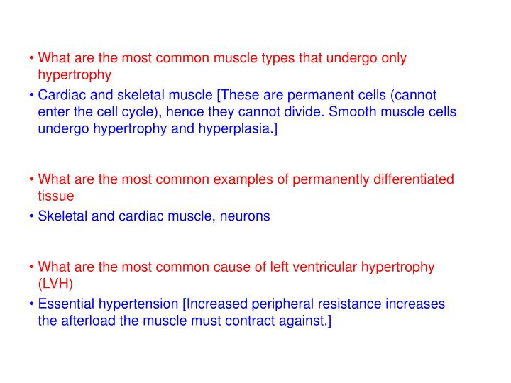 What are the most common muscle types that undergo only hypertrophy