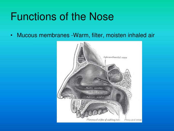 Functions of the Nose