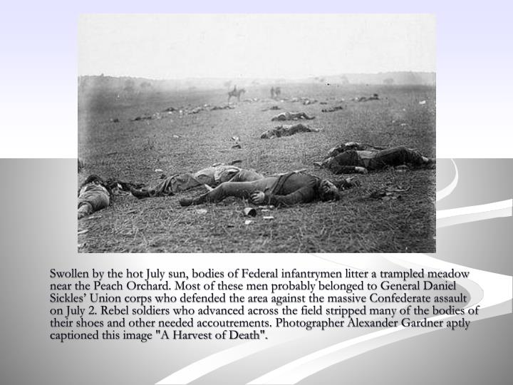 "Swollen by the hot July sun, bodies of Federal infantrymen litter a trampled meadow near the Peach Orchard. Most of these men probably belonged to General Daniel Sickles' Union corps who defended the area against the massive Confederate assault on July 2. Rebel soldiers who advanced across the field stripped many of the bodies of their shoes and other needed accoutrements. Photographer Alexander Gardner aptly captioned this image ""A Harvest of Death""."