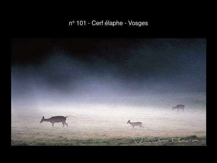 n° 101 - Cerf élaphe - Vosges