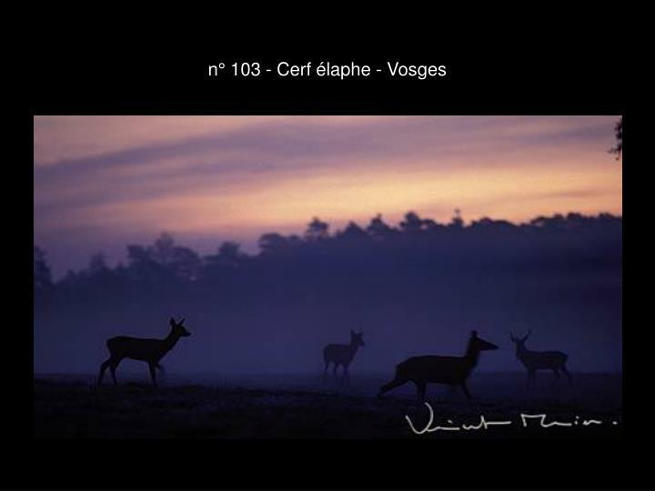 n° 103 - Cerf élaphe - Vosges