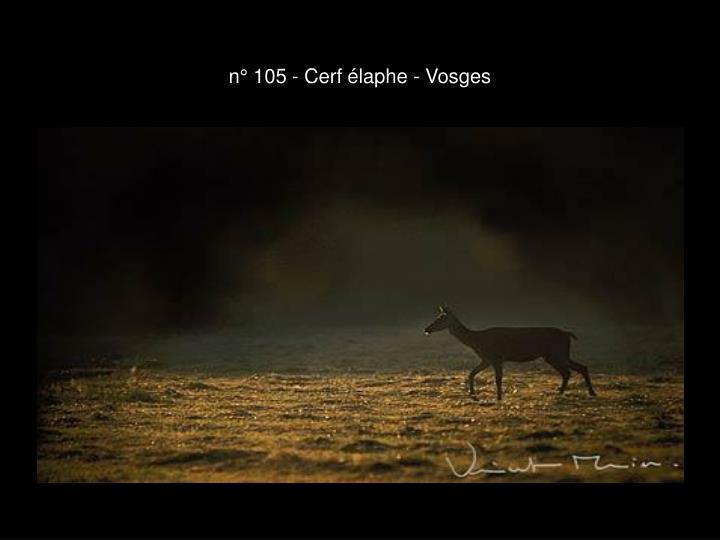 n° 105 - Cerf élaphe - Vosges