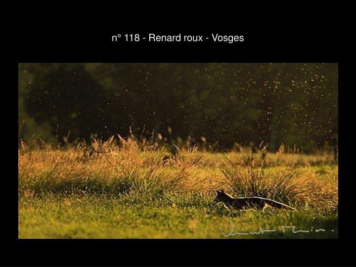 n° 118 - Renard roux - Vosges