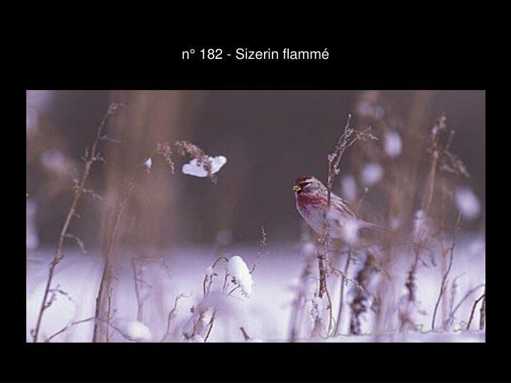 n° 182 - Sizerin flammé