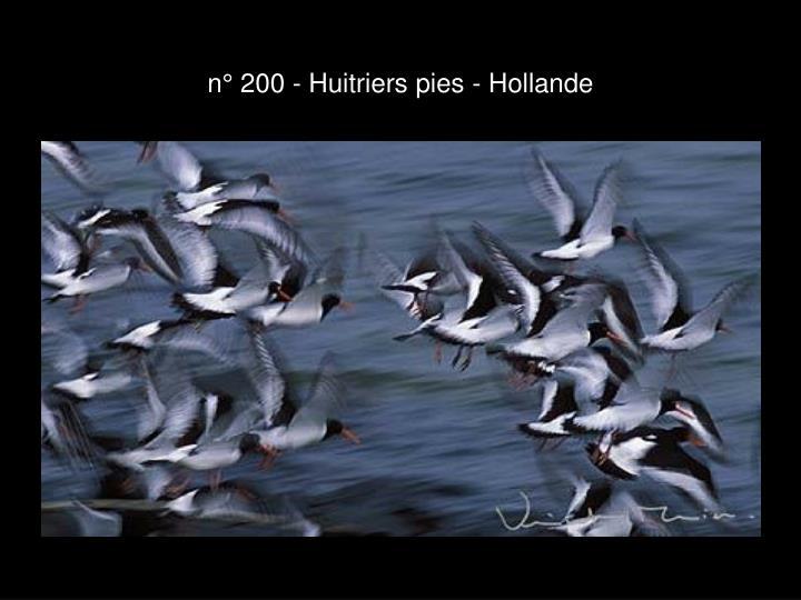 n° 200 - Huitriers pies - Hollande