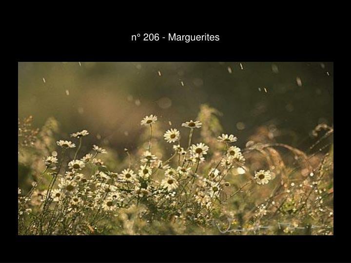 n° 206 - Marguerites
