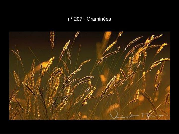 n° 207 - Graminées