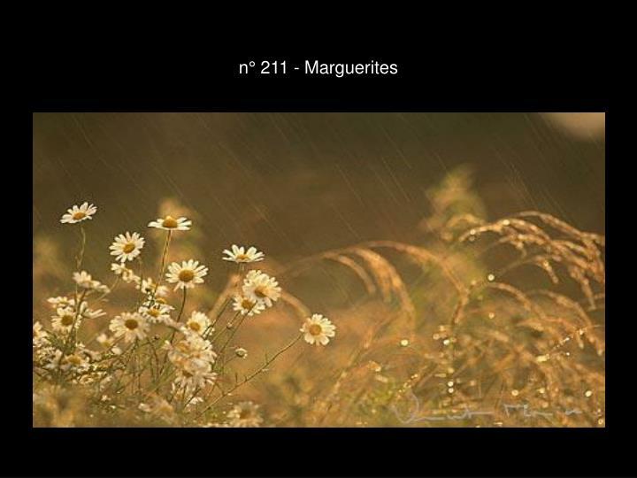 n° 211 - Marguerites