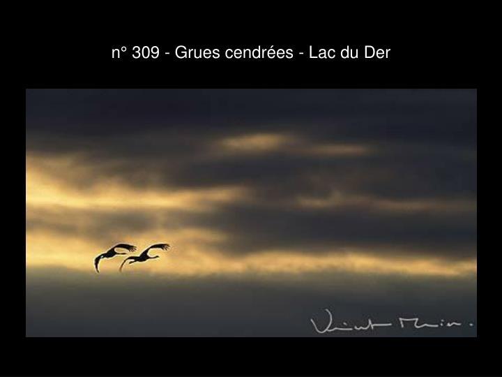n° 309 - Grues cendrées - Lac du Der