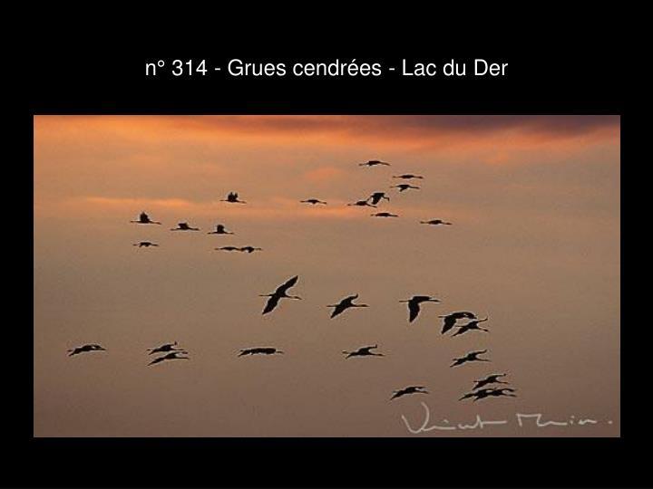 n° 314 - Grues cendrées - Lac du Der
