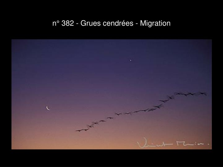 n° 382 - Grues cendrées - Migration