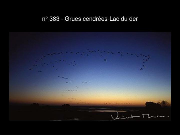 n° 383 - Grues cendrées-Lac du der