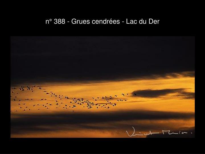 n° 388 - Grues cendrées - Lac du Der