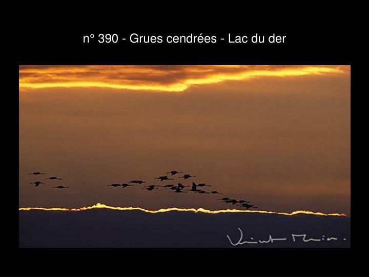 n° 390 - Grues cendrées - Lac du der