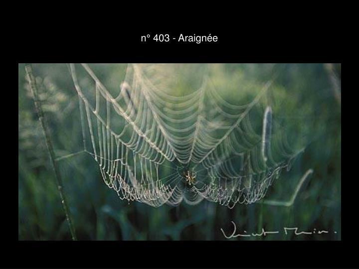 n° 403 - Araignée