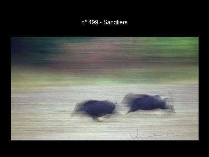 n° 499 - Sangliers