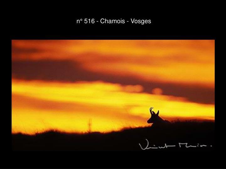 n° 516 - Chamois - Vosges