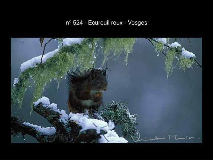 n° 524 - Ecureuil roux - Vosges